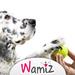 Jouer avec son chien - Wamiz
